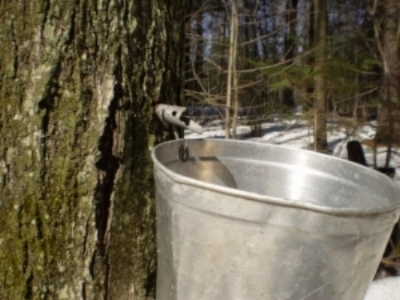 maple-syrup-season.jpg