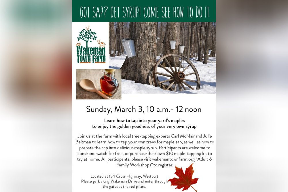 c1f4f3f53ad Learn how to tap your own Maple trees and turn the sap into syrup on  Sunday