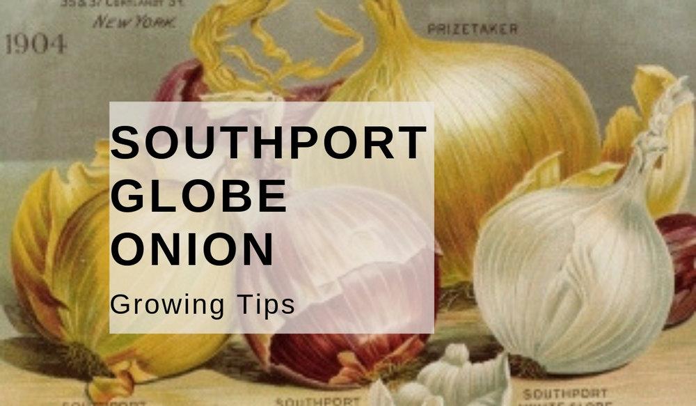 Southport Globe Onion.jpg