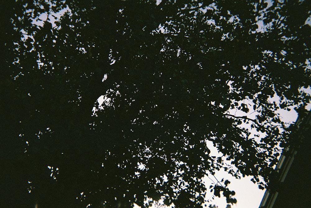 The World Beyond the Trees     Why reach for the sky when you can have your footprint on the moon? Go for it.      El mundo más allá de los árboles   ¿Por qué soñar con alcanzar el cielo cuando podrías dejar tu huella en la luna? Inténtalo.
