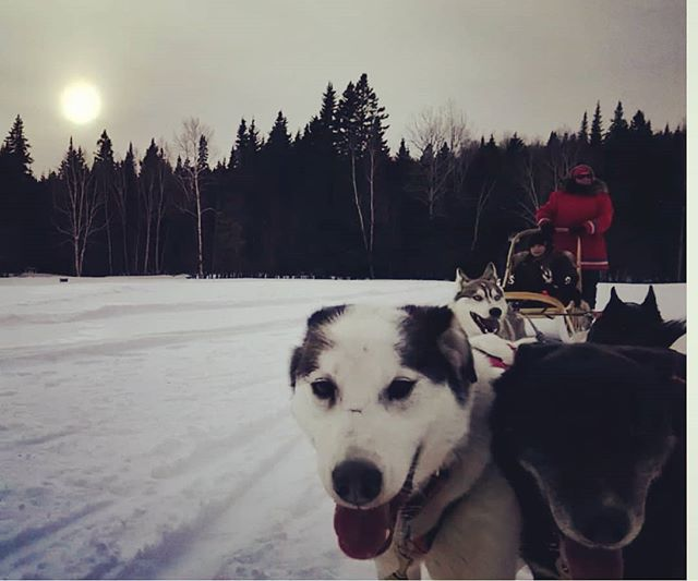 All smiles from the hardest working team 🐾🐾 .. #sleddogs #welldernessNB #mieuxetreennature #smile #bestteam #winterfun