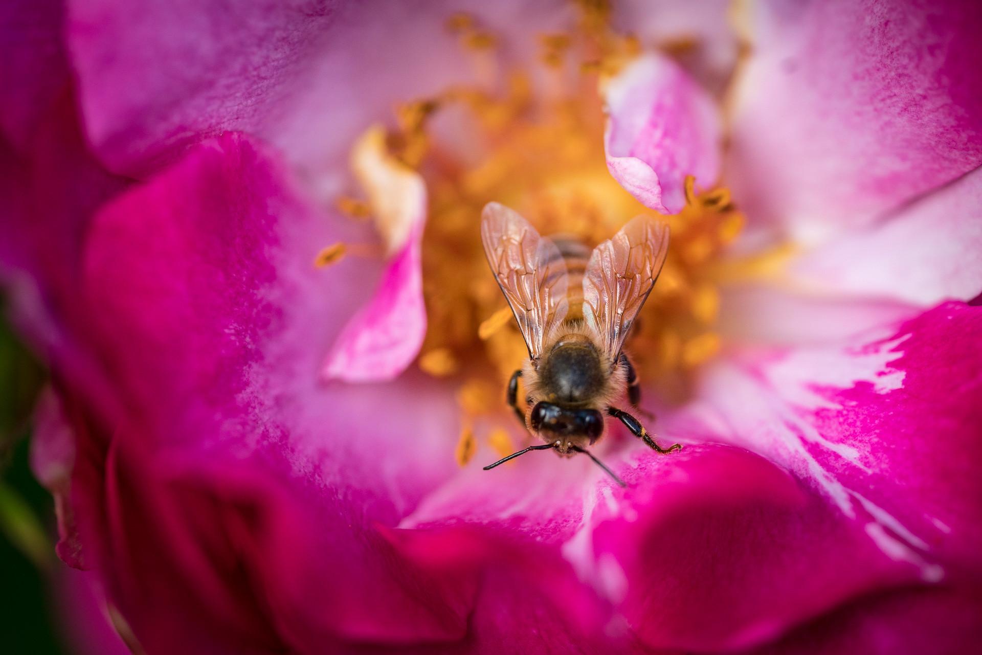 BeeFlower
