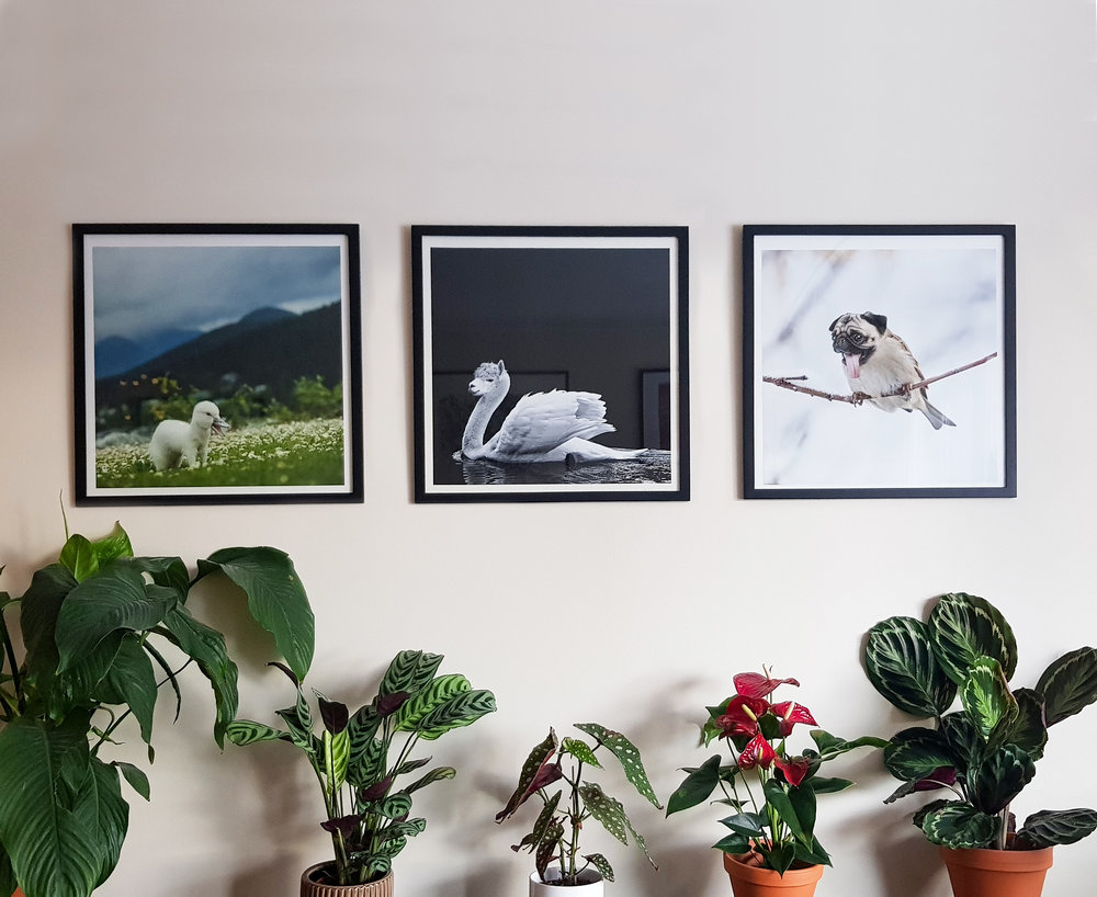 Swerret, Swama and Spug prints (18x18 in.) framed.