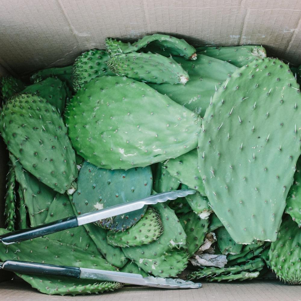 Cactus & Drylands Workshop feat. desert ArtLAB   May 19, 2018