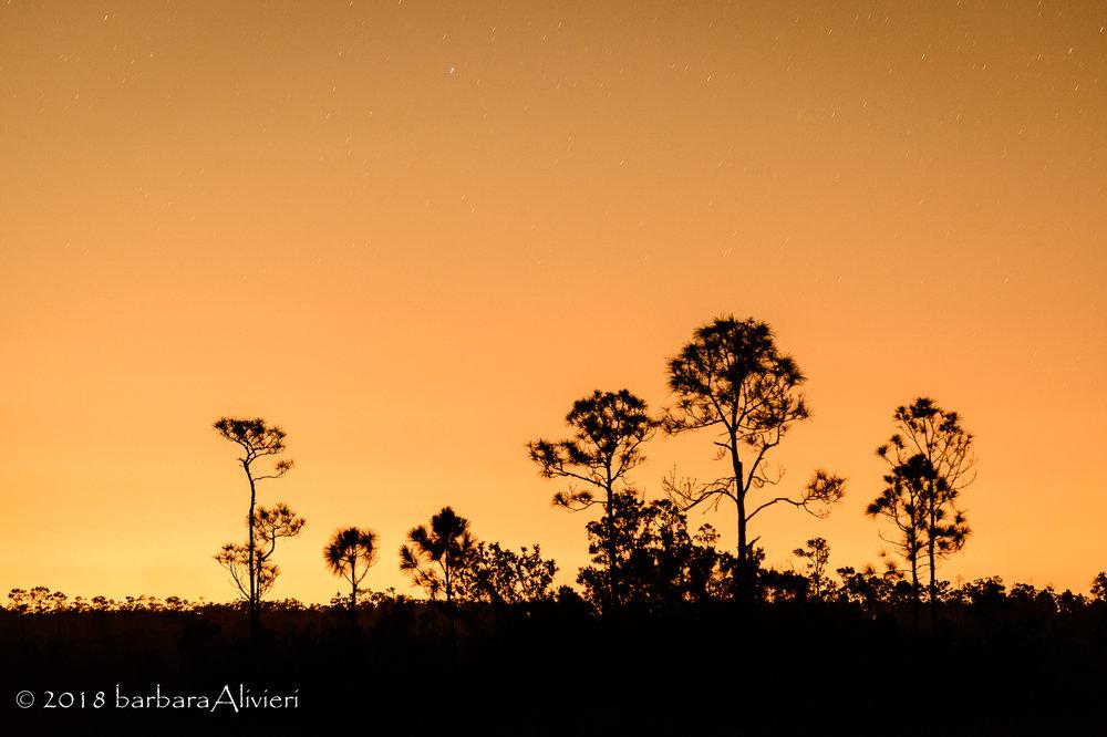Facing northeast. On Mahogany Hammock Road, Everglades National Park