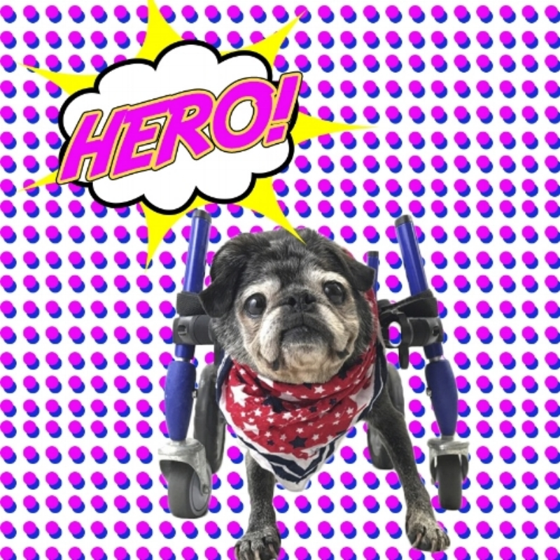 wheeling superheroes - is a non-profit organization bringing brand new wheelchairs to dogs worldwide.DONATE100% of your money brings wheelchairs to dogs in need when you donate.How?Volunteers and private donors cover our operating costs so 100% of your donation will help dogs in need.