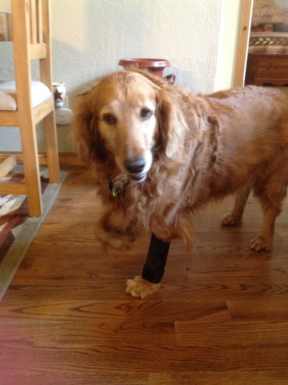 gracie - 9 Year Old Golden Retriever ~ Okemah, OK ~ Custom Front-Wheel Cart ~ $900Wheelchair Ordered!Gracie has been on 3 legs for 1&1/2 yrs. she has nerve neuropathy in her cervical spine and total atrophy of her front right leg. Her left leg is wearing out.Any help would be greatly appreciated. -Gracie's Mom