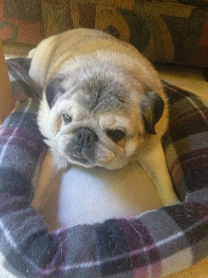 Sam Arthur    - Date of Birth: 01/31/2004, 14 year old pug ~ Bainbridge Island, WANeeds: Small Rear-End Wheelchair ~ $200.00Donations received: $200.00 (Updated 7/28/2018)Please consider donating to other puppers on our waiting list.
