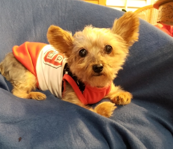 hydie - 9 year old Yorkie from Grove, OKHydie has poly arthritis and her front paws are severely disfigured. She is not able to walk at all and is in need of a custom wheelchair: $$480Read MoreDonate | Sponsor | Share |100% of your money brings wheelchairs to dogs in need when you donate.