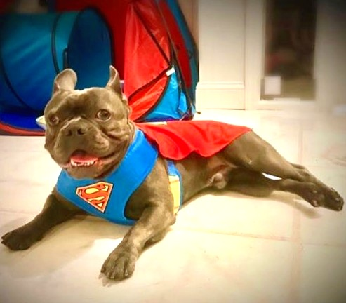 - Monsoeir Rawlings is a 4 year old Blue French Bulldog from Delray Beach, Florida. About half a year ago Rawlings lost mobility on his back legs. Nowadays his mom is lifting his legs up so he can walk and even run to chase cats.Rawlings needs of a rear-end wheelchair: $275