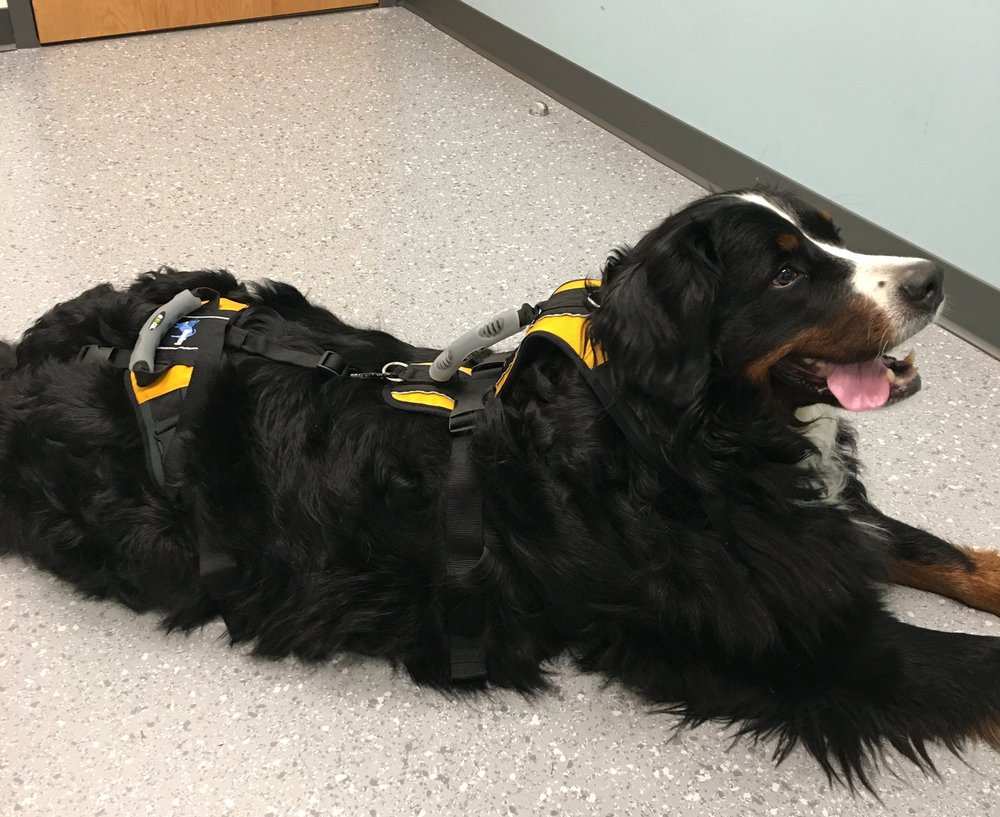 """- """"Kaya lost her ability to walk in November of 2018. A month later she was diagnosed with spinal cord cancer. She is currently on chemotherapy medication fighting her illness and doing well, all things considered. However, our vet thinks that she will have permanent nerve damage and be unable to regain full mobility in her legs."""" — Galina, Kaya's MomKaya is in need of a quad wheelchair: $1250"""