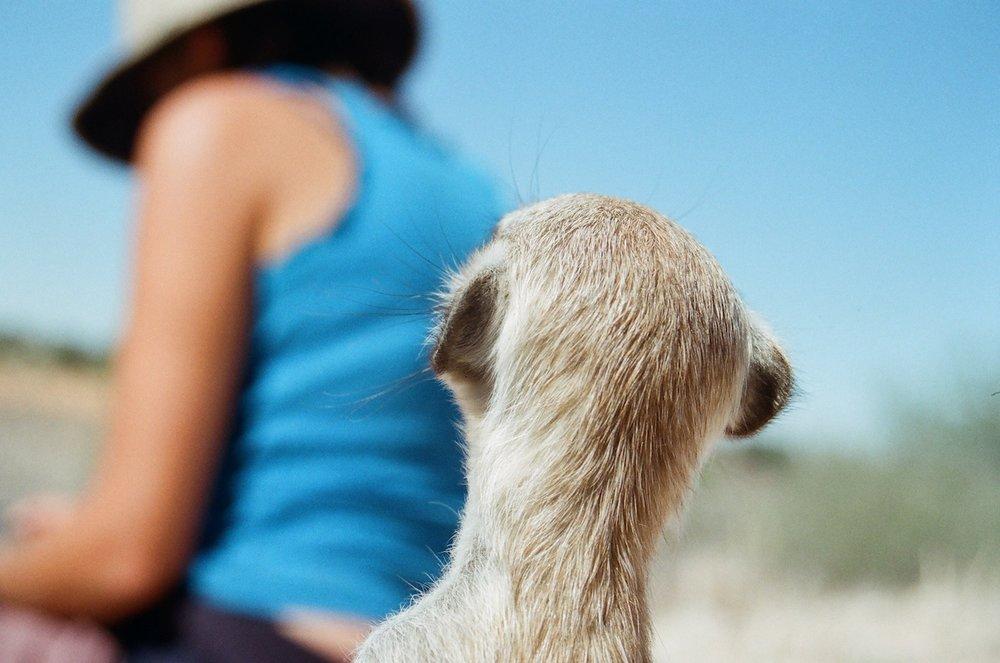 small meerkat.jpg