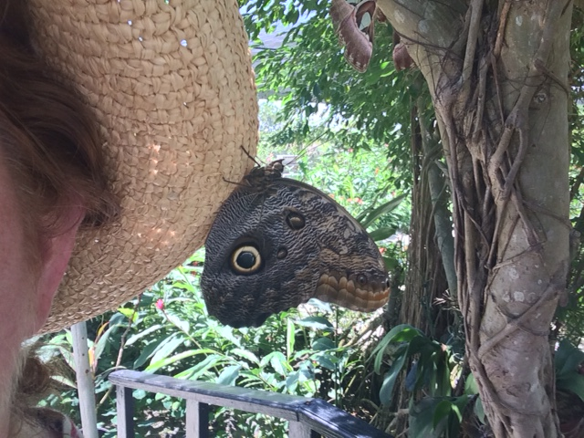 owl moth on hat