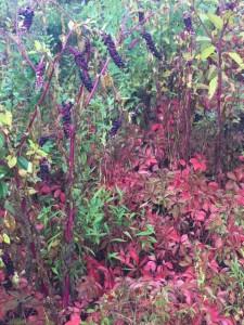 fall plants wild