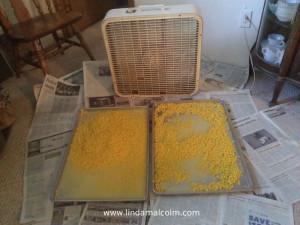 12 corn cooling