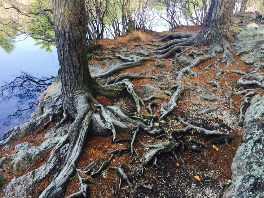 root path at Breakheart.jpg