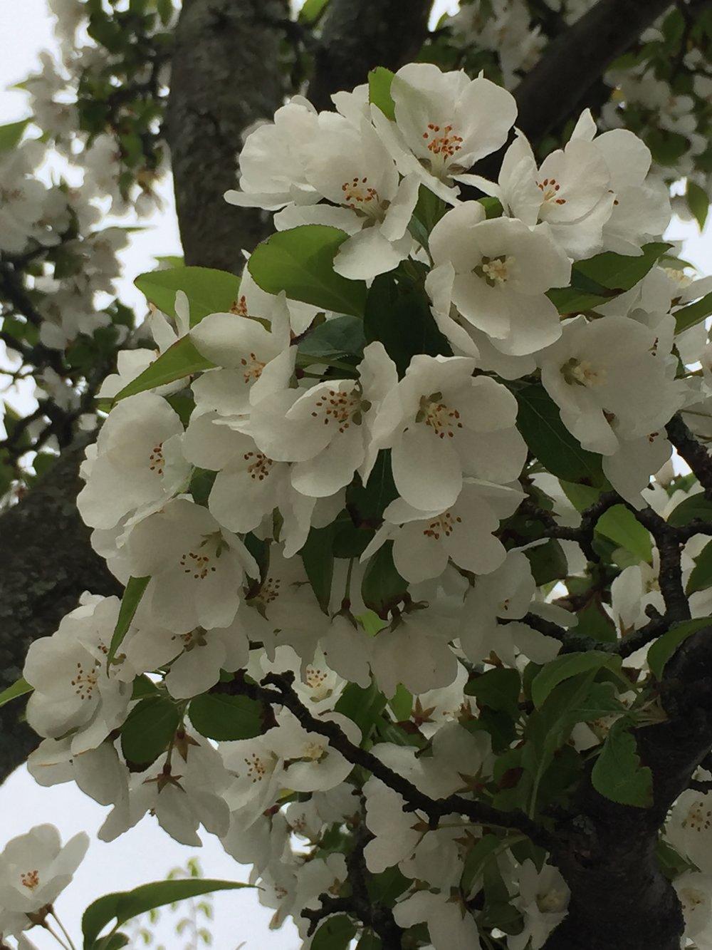 spring_flower_1.jpeg