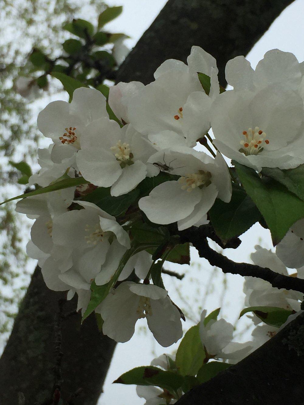 spring_flower_3.jpeg
