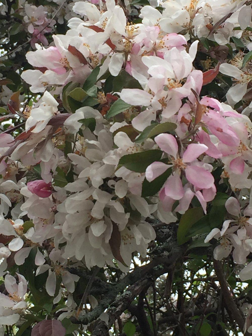 spring_flower_6.jpeg