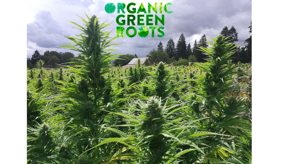100% Organic Farm-to-Table Hemp.jpg