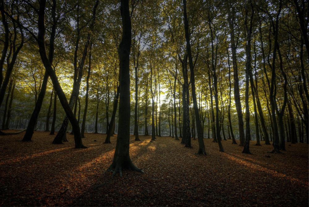 Hopwas_Woods_Sun.jpg