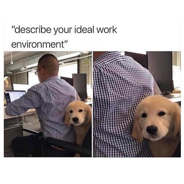 Online shopping at our desks with a puppy is our ideal work life balance. New episodes coming soon! Happy Friday everyone 👋🏼 . . . . . . . . . . . . . . #positivevibes #positivity #positivespinpodcast #apositivespin #podcast #comedy #comedypodcast #comics #comedians #goodnews #goodvibesonly #goodvibes #sarastarkman #katebarron #gooddeeds #staypositive #selflove #toronto #canada #podcasting #podcastlife #podcasters #instagood