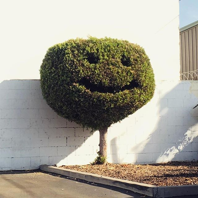 One of Bob Ross' little happy trees? 🌲 ❤️
