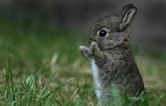 Black rabbit.jpg