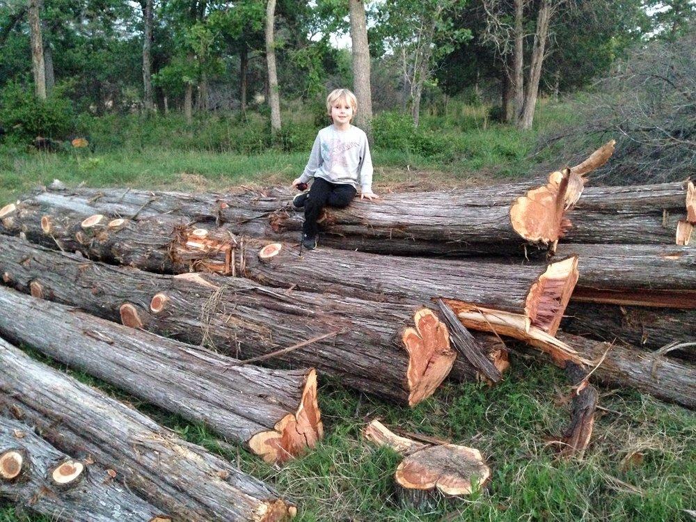 Augie on trees.JPG