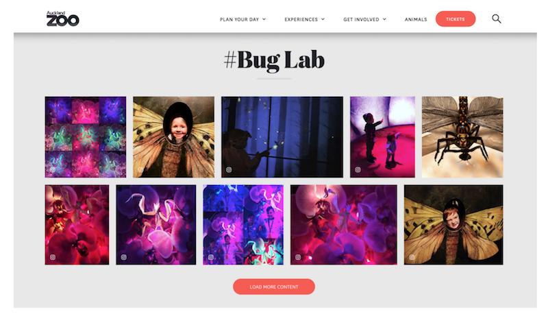#BugLab  Stackla Widget —  Auckland Zoo Bug Lab page .