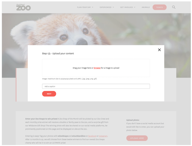 Stackla GoConnect —  Auckland Zoo Snaps page.