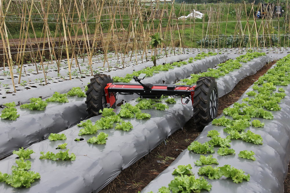 Di-Wheel performing a lettuce row scan