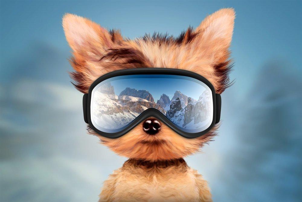 Ski Travel Guru (image © Boule13   Dreamstime.com)