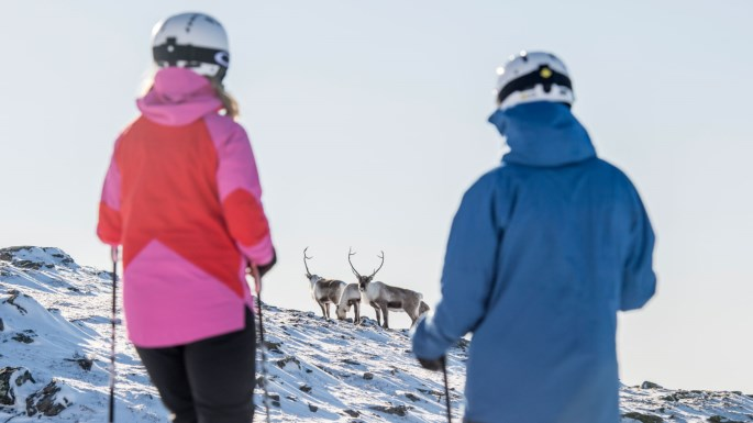 Dasher and Dancer, maybe. Real reindeer, definitely. |  SkiStar