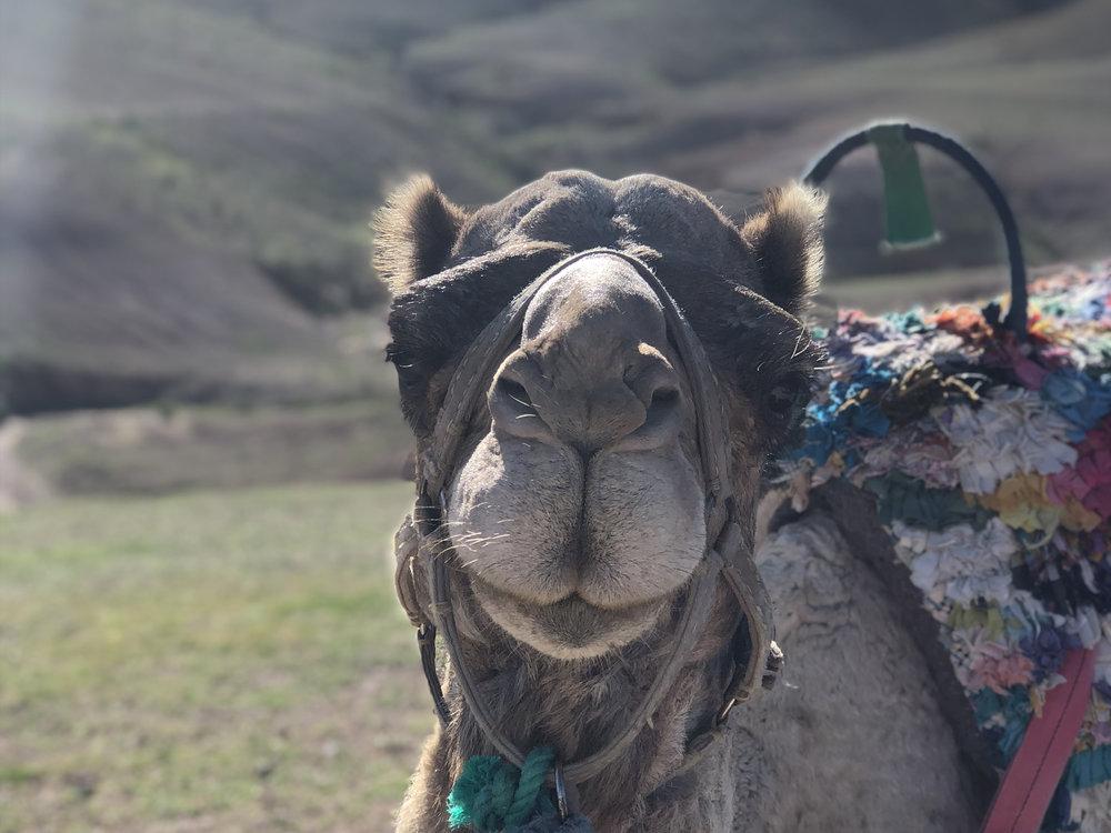 marrakech -