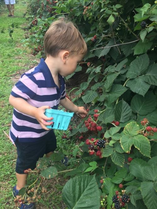 kenzi blackberry picking.jpg