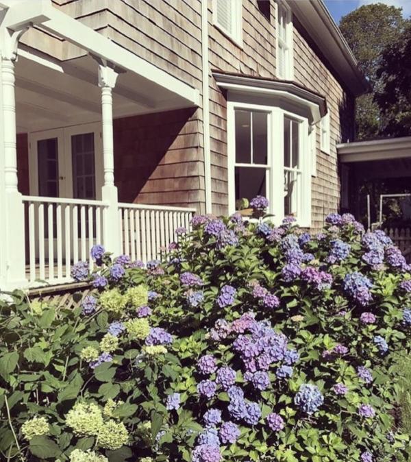 side house hydrangea.jpg