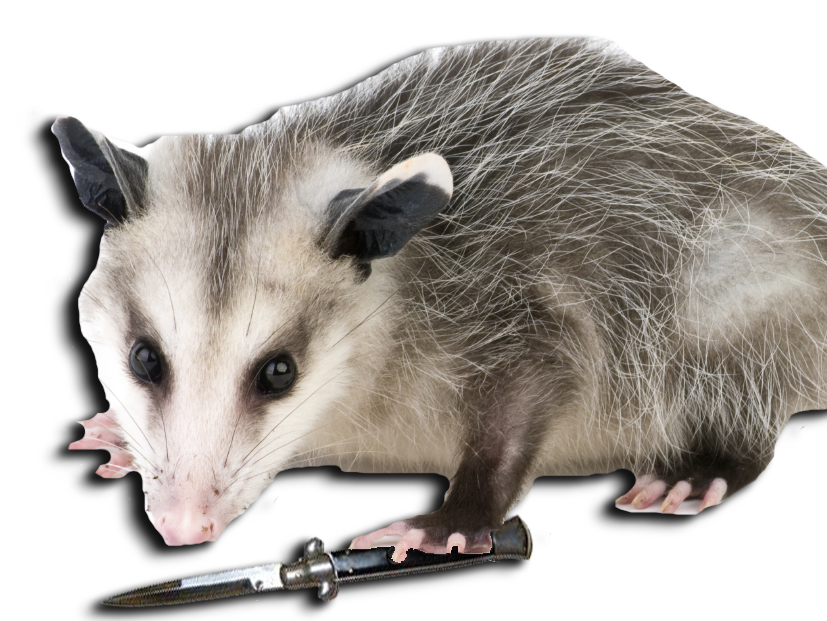 possum switchblade