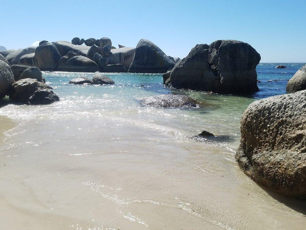 jackass penguin cape town boulders beach south africa