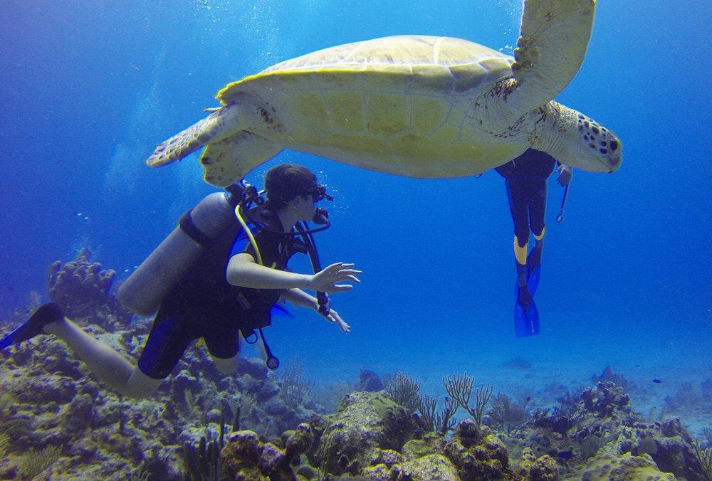 diver-549380.jpg