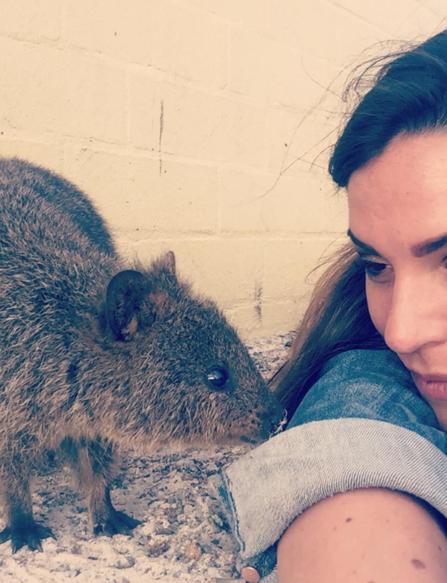 (Quokka's Selfie - Rottnest Island)