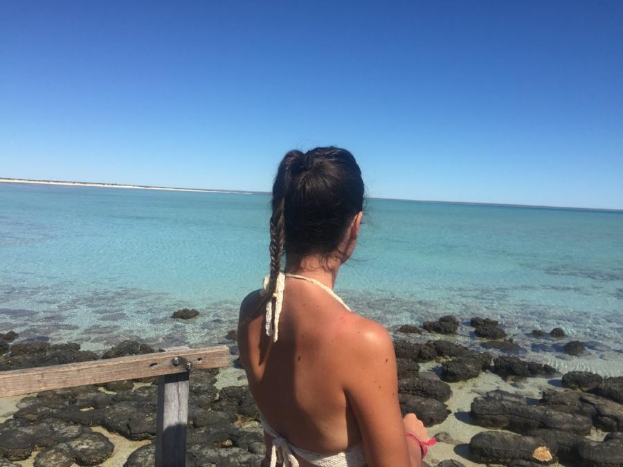 (Shark Bay)