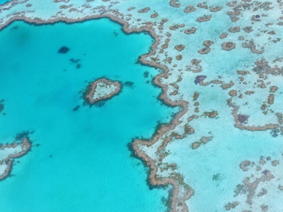 (Reef Heart - Whitsundays)