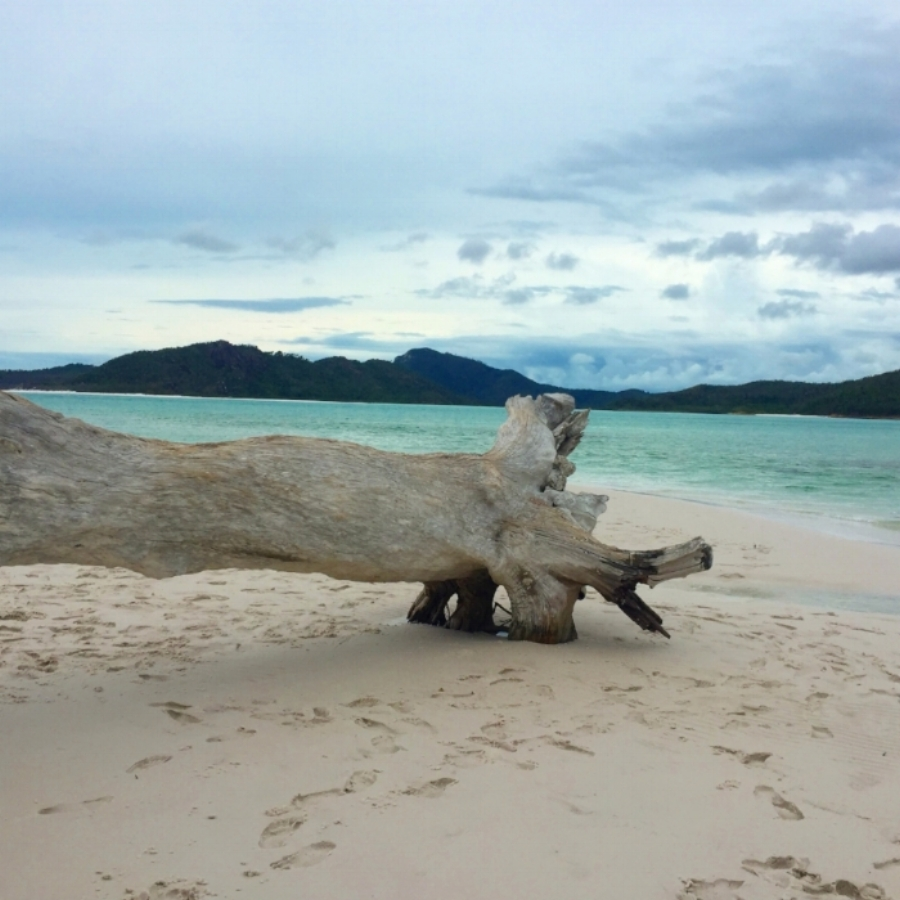 (White Haven Beach - Whitsundays)