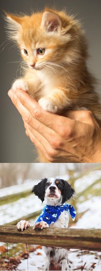 Kitten-dog image for scrolling