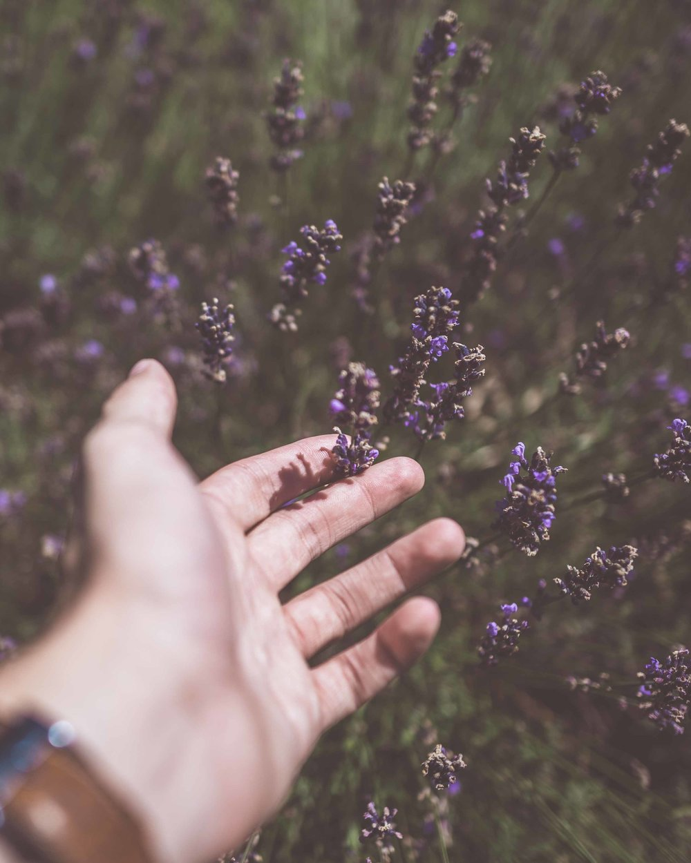 8. DIFFUSE LAVENDER - The calming and sedative properties of Lavender are age old. Diffusing it's oil from the moment you get home and continuing throughout the night can drastically improve your sleep. It also helps that the smell is so heavenly!Image: Unsplash