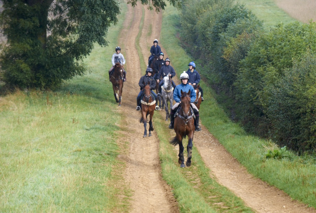 VIEW HORSES FOR SALE -