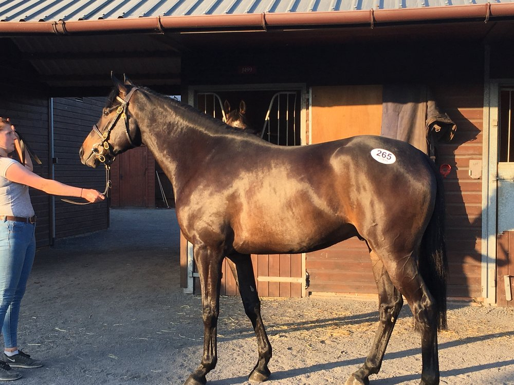 3 Year-Old by Great Pretender