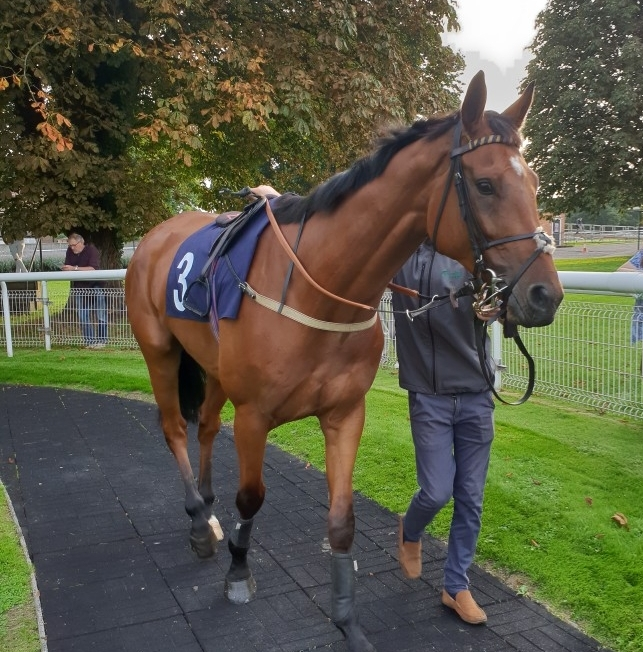 Kings Temptation at Fontwell