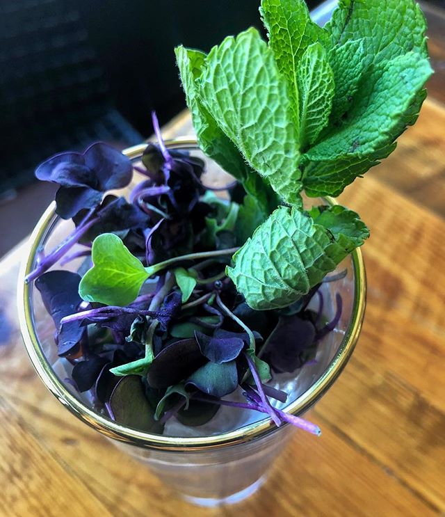 Is your garden nursing a winter hangover and taking its time to wake up?? Come get your dose of greens with our Garden Oompah. 🍹🌱 Whippoorwill Farm radish micros and a handful of fresh mint to wake your senses riiight up!